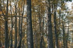 In i skogen Arkivfoto