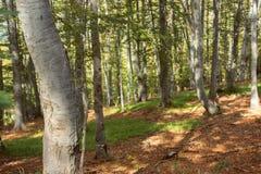 In i skogen Arkivbilder