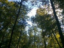 I skogen Fotografering för Bildbyråer
