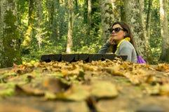 I skogen Arkivbild