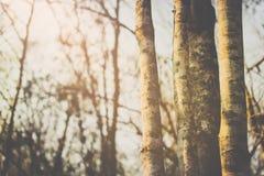 I skogen Royaltyfria Bilder