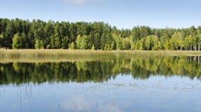I skogen Arkivfoton
