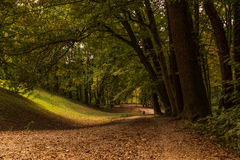 I skogen Arkivfoto