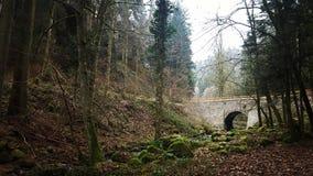 I skogen Royaltyfri Bild