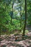 I skogen Royaltyfri Foto