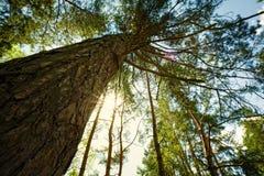 I skogen abstrakt naturligt landskap Royaltyfri Bild