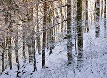 I skogen av snö Fotografering för Bildbyråer