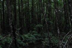 I skogen arkivbilder