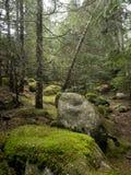I skogen som täckas med mossa Arkivfoto