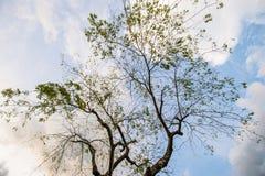 I slept under a tree 2 Stock Photos