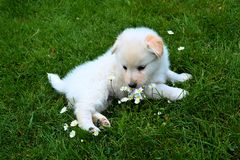 I am a small puppy and my name is Sara. stock photos