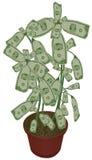 I soldi si sviluppano sugli alberi Fotografia Stock Libera da Diritti