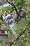I soldi si sviluppano sull'albero Fotografia Stock