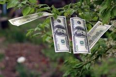 I soldi si sviluppano sull'albero Fotografia Stock Libera da Diritti