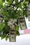 I soldi si sviluppano sull'albero Immagini Stock