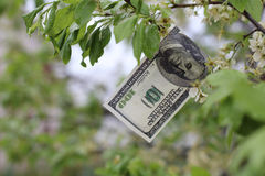 I soldi si sviluppano sull'albero Fotografie Stock Libere da Diritti