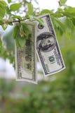 I soldi si sviluppano sull'albero Immagine Stock Libera da Diritti
