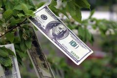 I soldi si sviluppano sull'albero Immagine Stock