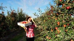 I solens strålar går den kvinnliga bonden i plädskjorta och hatten mellan raderna av äppleträd hon rymmer asken, plockning lager videofilmer