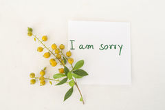 I am sorry message card and grain flowers Stock Photo