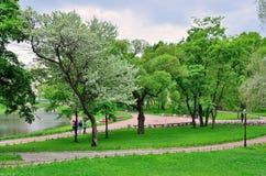 I staden parkera våren Fotografering för Bildbyråer