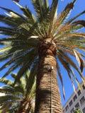 I stadens centrum Anaheim Arkivbilder