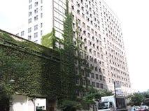 I stadens centrum grönskaför mycket på arkitektur Chicago Arkivfoto