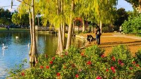 I stadens centrum Orlando, Eola sjön och parkerar stock video
