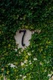 7 i sten Arkivfoto