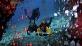 I subaquei subacquei su fondo della scuola pescano in Maldive video d archivio