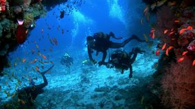 I subaquei subacquei su fondo della scuola pescano in Maldive stock footage