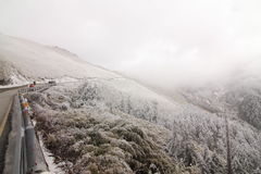 I Taiwan Nantou Hehuan bergsnö Royaltyfria Foton