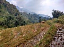I terrazzi del riso Fotografie Stock Libere da Diritti
