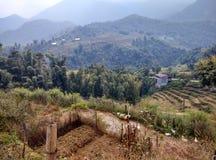 I terrazzi del riso immagini stock libere da diritti