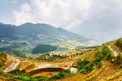 I terrazzi del riso hanno riempito di acqua agli altopiani di PA del Sa, Vietnam Immagini Stock