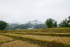 I terrazzi del riso sistemano in Mae Klang Luang, Chiang Mai, Tailandia Immagine Stock