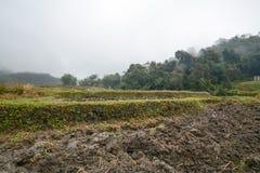 I terrazzi del riso sistemano in Mae Klang Luang, Chiang Mai, Tailandia Fotografie Stock Libere da Diritti