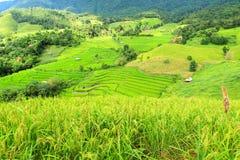I terrazzi e la montagna verdi del riso con riso sistemano la priorità alta Fotografia Stock Libera da Diritti