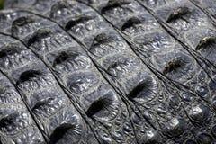 I terreni paludosi della pelle del coccodrillo indicano la sosta nazionale Florida S.U.A. Fotografie Stock