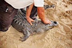 I terreni paludosi Florida S.U.A. di manifestazione della fauna selvatica dell'alligatore dirigono la manovra della serratura Fotografia Stock