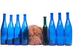 I think I drank too much... Stock Photo