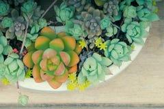 I tipi multipli di succulenti in vaso bianco Fotografia Stock
