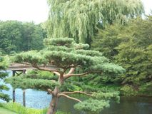 Botanical gardens view oriental garden. I took this picture at botanical gardens last year. so beautiful Stock Photos