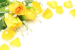 Yellow rose and haze grass. I took yellow rose and haze grass in a white background Stock Photography
