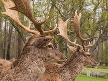 I träda raring för par Royaltyfria Foton