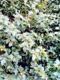 I trädgården arkivfoto