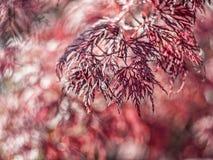 I trädgården Royaltyfria Bilder