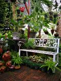 I trädgården royaltyfri fotografi