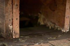 I travetti di legno nocivi hanno scoperto per il lavoro di riparazione immagine stock