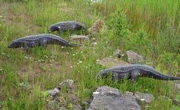 I tre delle ricostruzioni dei rettili e degli anfibi mesozoici Fotografia Stock Libera da Diritti